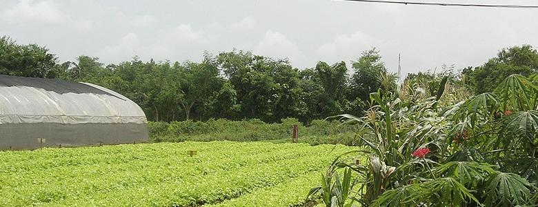 apoyo-agricultura-ecologica