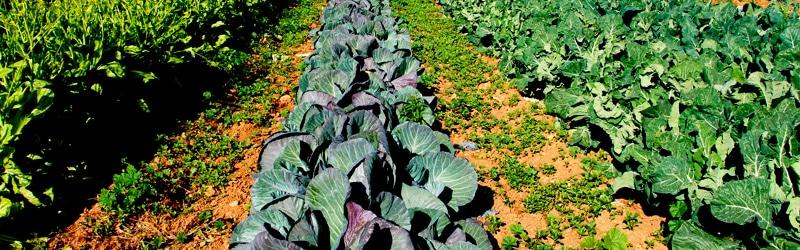 cultivo-produccion-ecologica