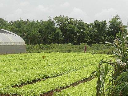 instalaciones de agricultura ecológica