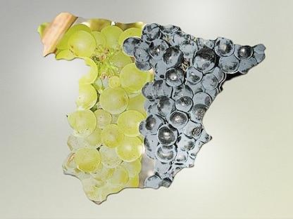 mapa de españa con la imagen de la mitad con uvas blancas y la otra mitad uva tinta