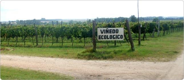 viñas de producción de vino ecológico