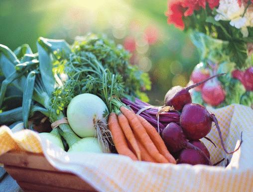 grupo de hortalizas ecológicas